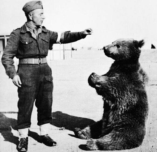 Chuyện về Wojtek, chú gấu chiến binh chiến đấu với Đức Quốc xã trong Thế chiến thứ II - Ảnh 1