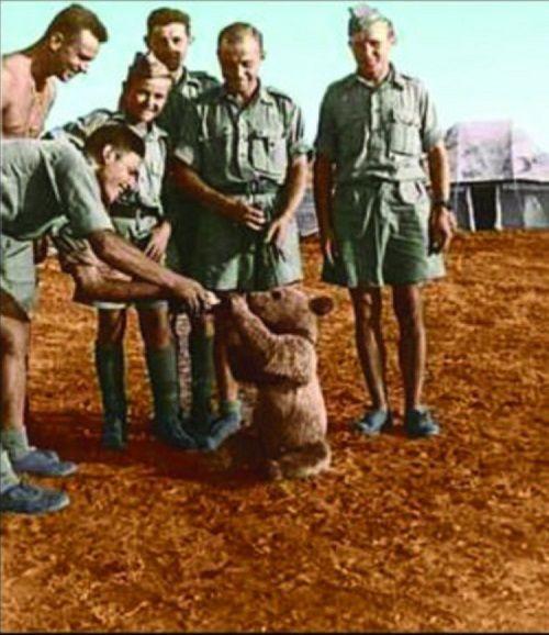 Chuyện về Wojtek, chú gấu chiến binh chiến đấu với Đức Quốc xã trong Thế chiến thứ II - Ảnh 2