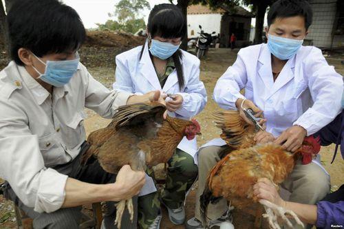 Bộ Y tế khuyến cáo bệnh cúm gia cầm nguy cơ cao lây sang người - Ảnh 1