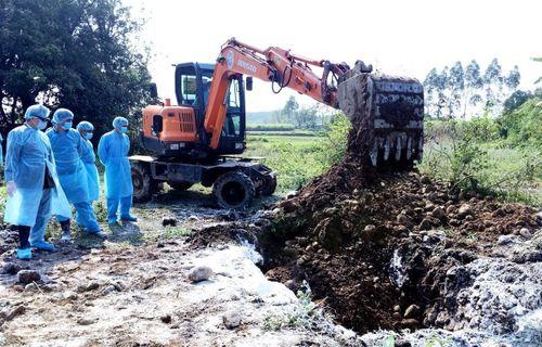 Quảng Ninh lập các chốt liên huyện kiểm soát dịch tả lợn châu Phi - Ảnh 1