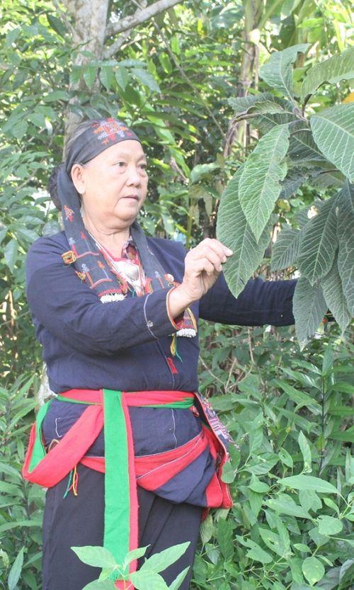 Loại cây đặc biệt trên núi có chức năng tăng cường sinh lý - Ảnh 2