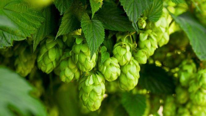 8 lợi ích bất ngờ khi uống bia - Ảnh 1
