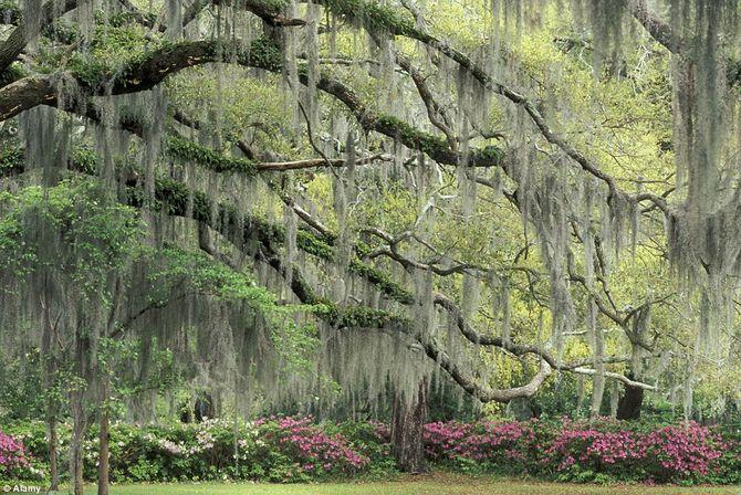 Chiêm ngưỡng 10 vườn hoa đẹp nhất thế giới - 9