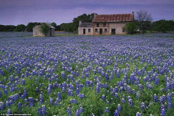 Chiêm ngưỡng 10 vườn hoa đẹp nhất thế giới - 11