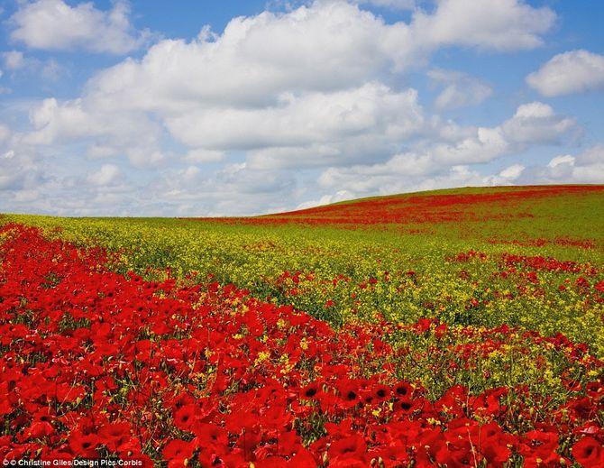 Chiêm ngưỡng 10 vườn hoa đẹp nhất thế giới - 8