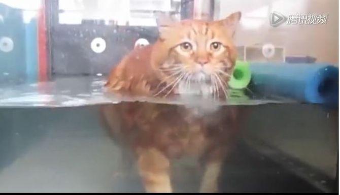 Sốc với chú mèo giảm được 10 cân sau 3 năm ăn kiêng và tập thể dục - Ảnh 4