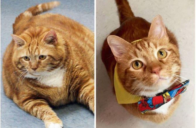 Sốc với chú mèo giảm được 10 cân sau 3 năm ăn kiêng và tập thể dục - Ảnh 1