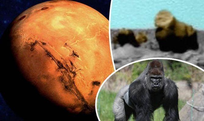 Tồn tại một khu rừng với nhiều loài động vật trên sao Hỏa?