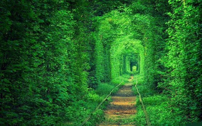 Chiêm ngưỡng những đường hầm cây đẹp nhất thế giới - Ảnh 1