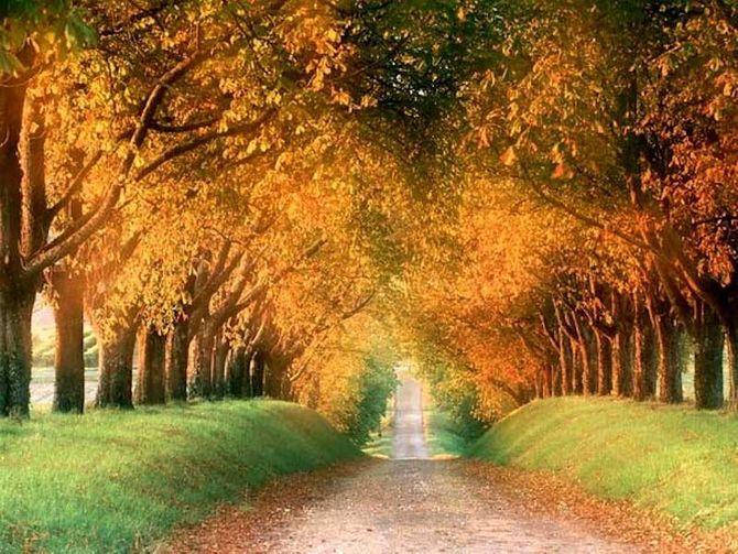 Chiêm ngưỡng những đường hầm cây đẹp nhất thế giới - Ảnh 10