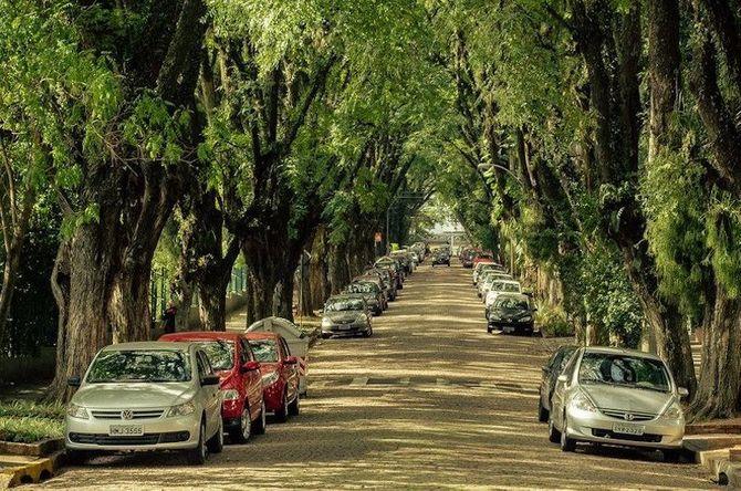 Chiêm ngưỡng những đường hầm cây đẹp nhất thế giới - Ảnh 2