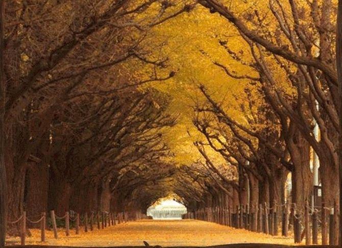 Chiêm ngưỡng những đường hầm cây đẹp nhất thế giới - Ảnh 3