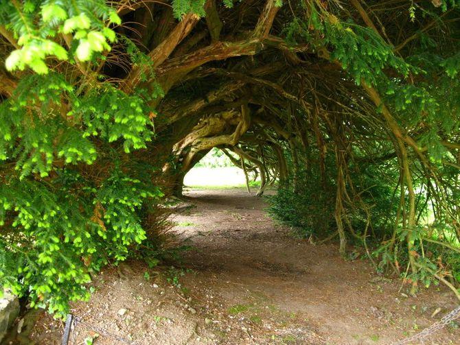 Chiêm ngưỡng những đường hầm cây đẹp nhất thế giới - Ảnh 5