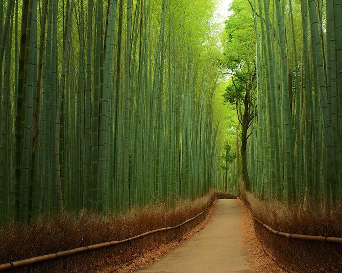Chiêm ngưỡng những đường hầm cây đẹp nhất thế giới - Ảnh 6