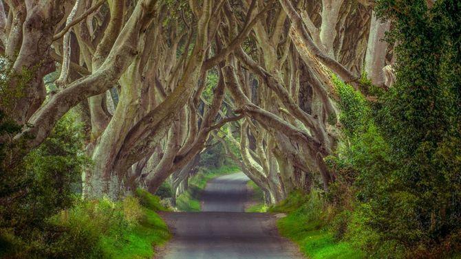 Chiêm ngưỡng những đường hầm cây đẹp nhất thế giới - Ảnh 8