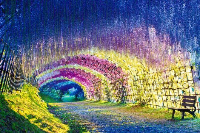 Chiêm ngưỡng những đường hầm cây đẹp nhất thế giới - Ảnh 9