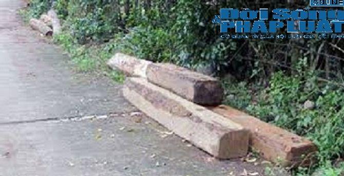 Đột kích điểm nóng khai thác gỗ lậu tại một xã vùng biên - Ảnh 1