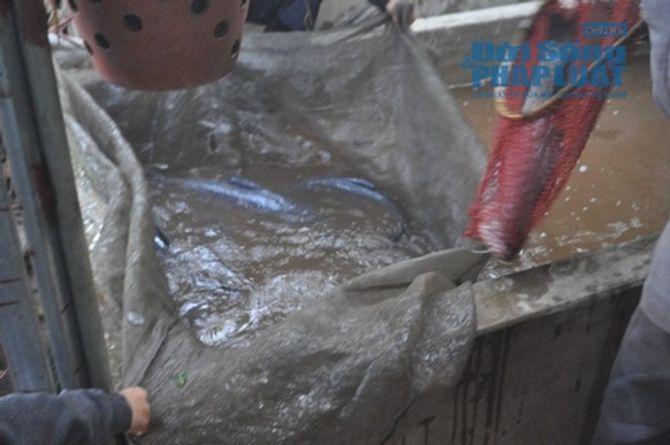 Chùm ảnh: Cá kho làng Vũ Đại vào tết - Ảnh 4