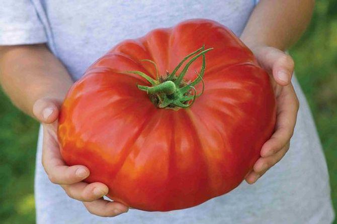 Chiêm ngưỡng quả cà chua khổng lồ nhất thế giới - Ảnh 1