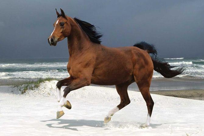 Kết quả hình ảnh cho con ngựa