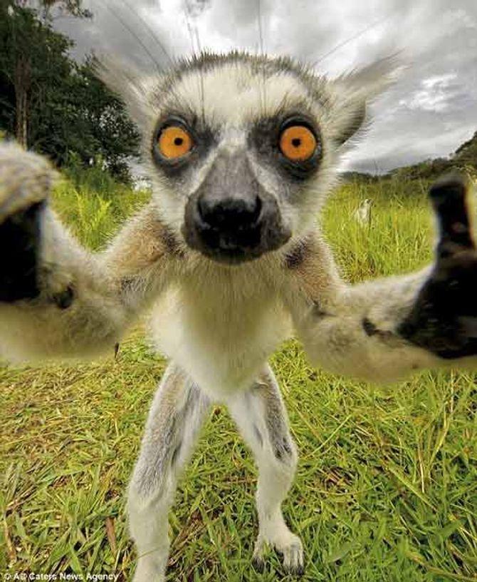 Ngắm những thước hình hài hước của các thú cưng trước camera - Ảnh 3