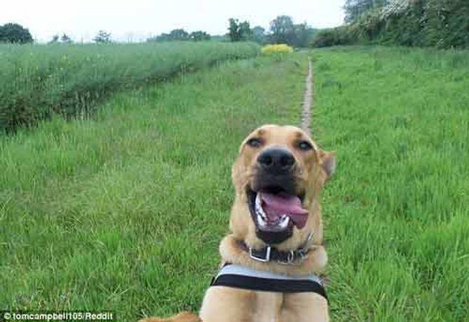 Ngắm những thước hình hài hước của các thú cưng trước camera - Ảnh 5