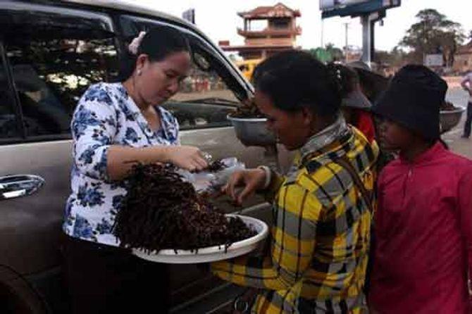 Rùng rợn đặc sản nhện đen chiên Campuchia