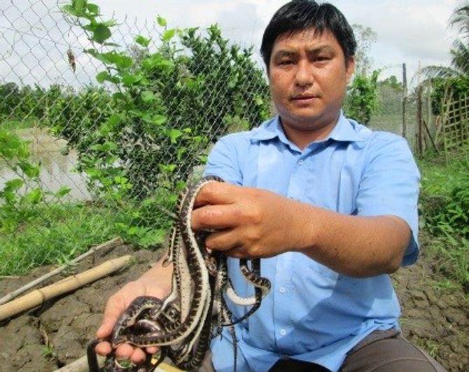 Nuôi rắn, kiếm hàng nghìn 'đô' mỗi tháng - Ảnh 1