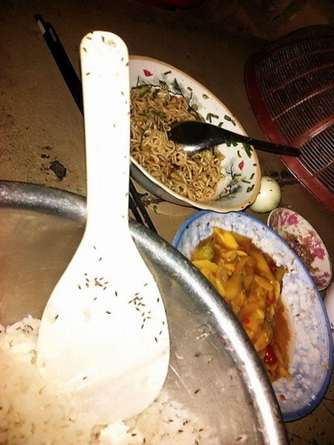 Côn trùng lạ bu dày đặc trong nhà nhiều hộ dân ở Bình Định