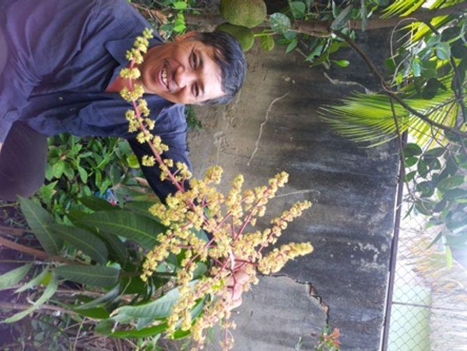 Kỳ lạ cây xoài trồng 3 tháng đã ra rất nhiều bông 1