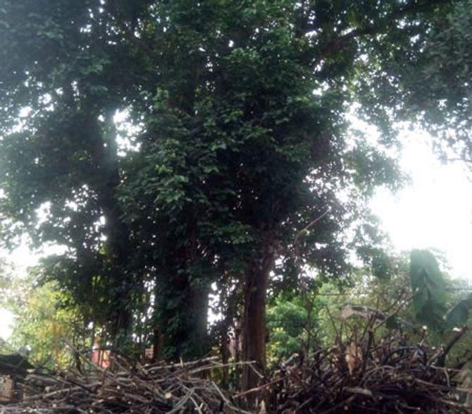 Bí ẩn cây