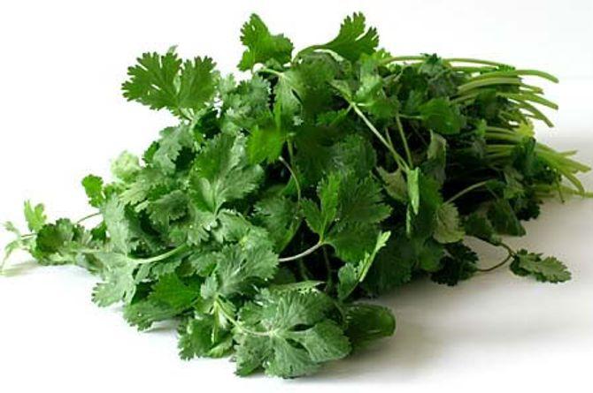 Lợi ích sức khỏe của rau mùi ít người biết đến - Ảnh 1