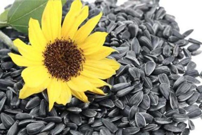 Tết ăn hạt hướng dương có lợi gì cho sức khỏe? - Ảnh 1