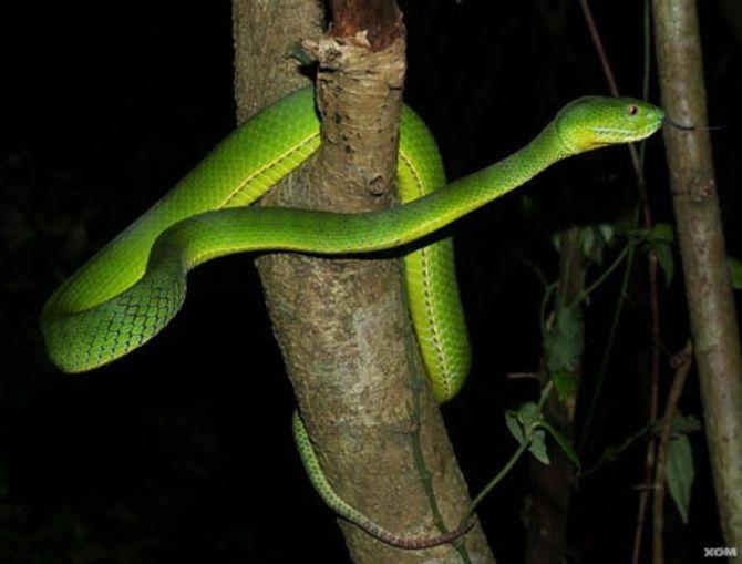 Nguyên nhân rắn lục đuôi đỏ xuất hiện nhiều bất thường