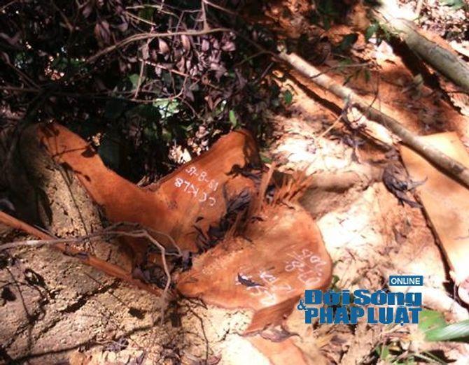 Hà Tĩnh: Báo động tình trạng phá rừng trên địa bàn huyện Vũ Quang - Ảnh 4