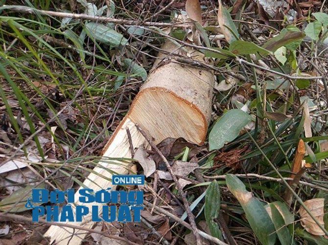 Hà Tĩnh: Báo động tình trạng phá rừng trên địa bàn huyện Vũ Quang - Ảnh 3