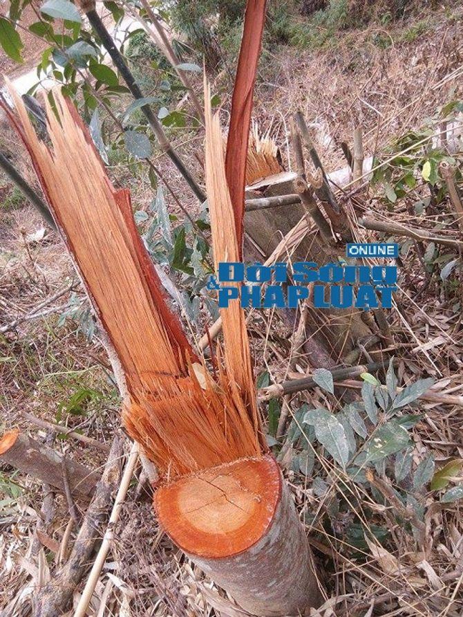 Hà Tĩnh: Báo động tình trạng phá rừng trên địa bàn huyện Vũ Quang - Ảnh 2