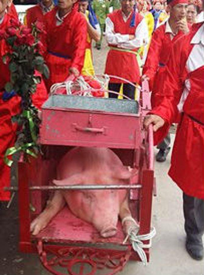 Lễ hội chém lợn ở Bắc Ninh: Máu nhuộm đỏ sân đình 5