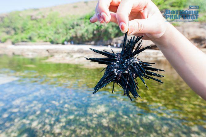 Những điểm đến hút hồn du khách trên đảo Lý Sơn - 4