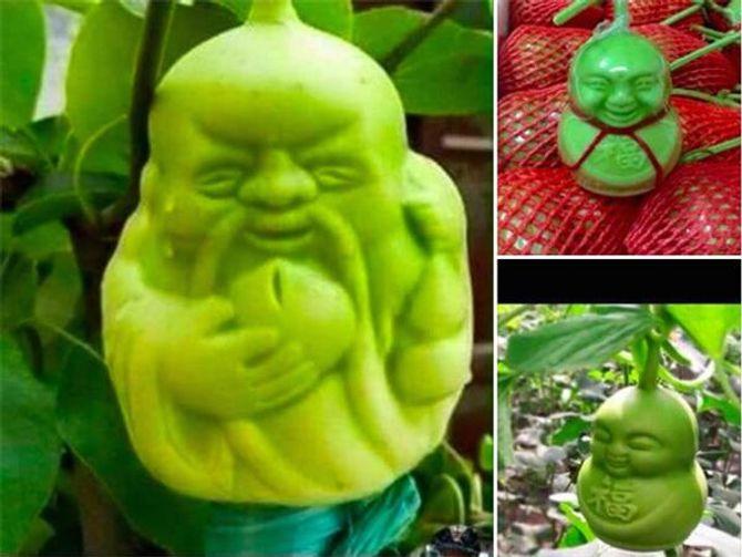 Bí mật của những trái lê hình Phật xuất xứ từ Trung Quốc đang