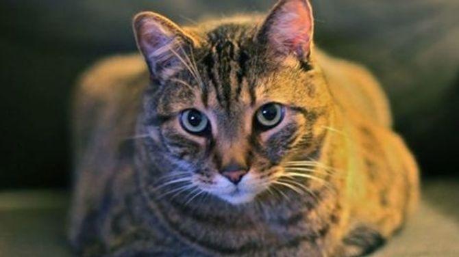 Cảnh báo mù mắt vì bị mèo liếm - Ảnh 2