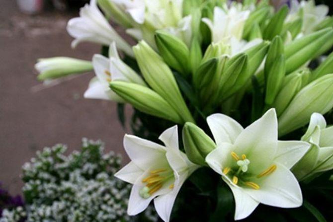 Ý nghĩa thiêng liêng của những loại hoa ngày Tết - Ảnh 5