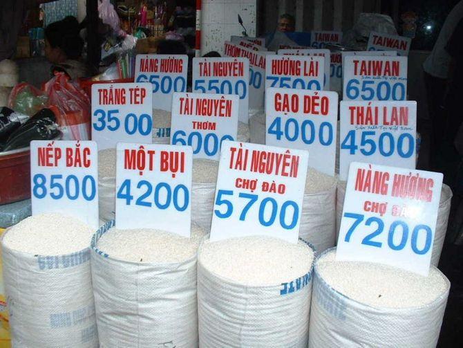 tp.hcm: lam ro thong tin xuat hien loai gao chua thach tin? - 1