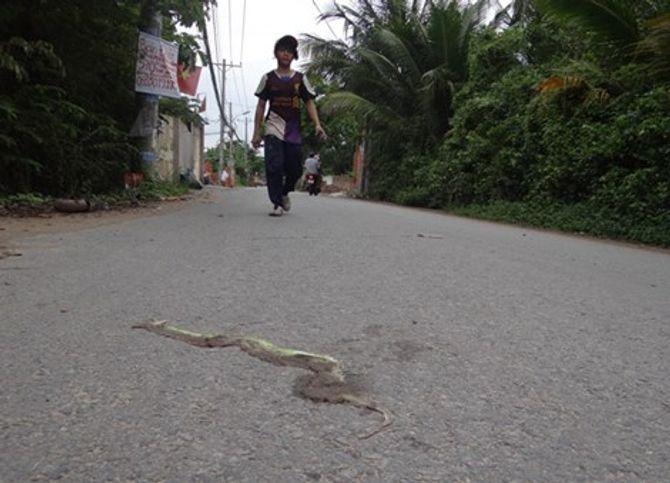 Hoang mang vì rắn lục đuôi đỏ xuất hiện và cắn người ngày càng nhiều