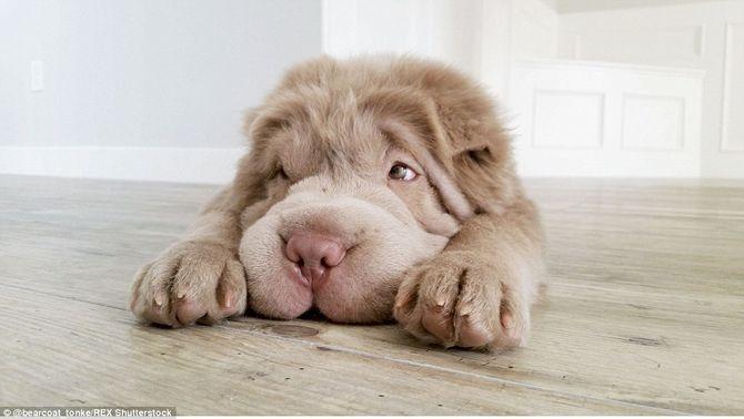 Chú chó siêu dễ thương của chàng Ngu làm tan chảy trái tim mọi người