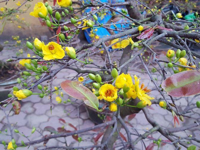 Nhộn nhịp chợ hoa Lạc Long Quân những ngày cuối năm - Ảnh 8