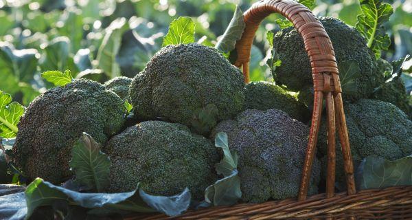 Những loại rau củ cực tốt cho bà bầu - Ảnh 7