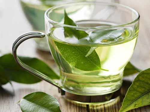 Vì sao bà bầu không nên uống trà xanh? - Ảnh 2