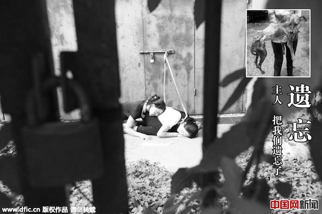 Lặng người trước ảnh của các vũ công hóa thân thành... chó bị bạo hành - Ảnh 9