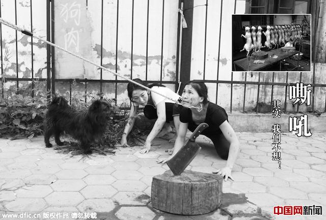 Lặng người trước ảnh của các vũ công hóa thân thành... chó bị bạo hành - Ảnh 1